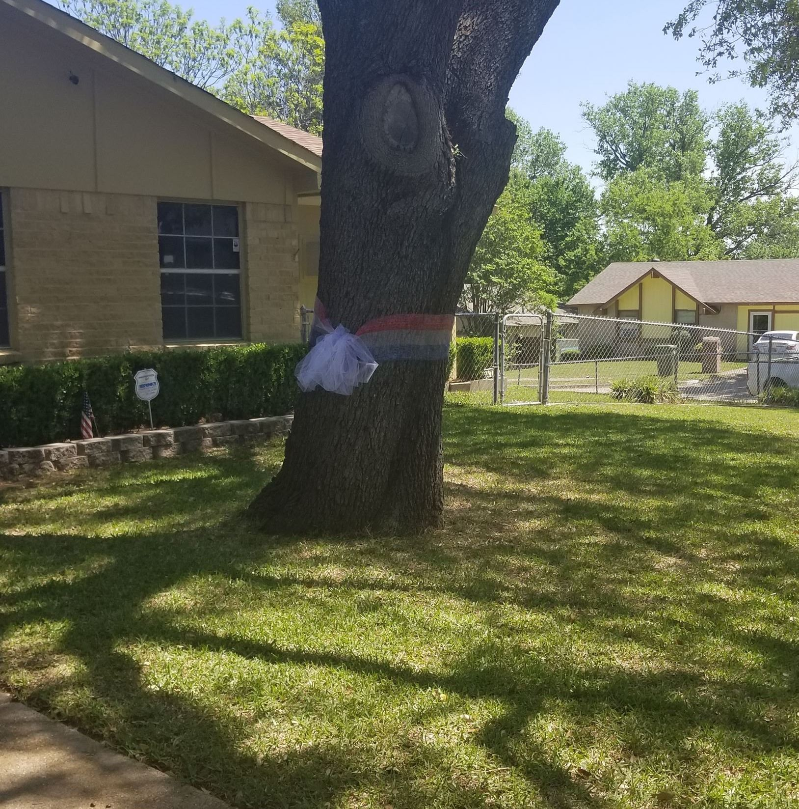 White ribbon around a tree in front yard of a house.